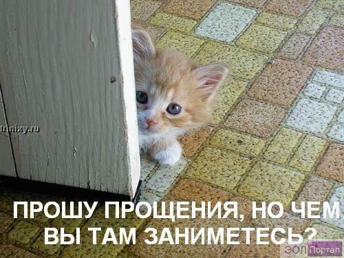 gallery_427_14_21021.jpg