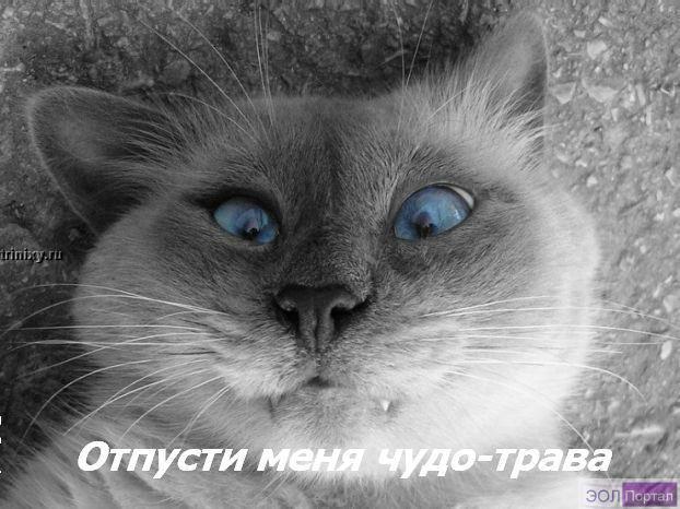 gallery_427_14_51252.jpg